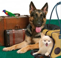 Pet Watch Inc. - Pet Sitting, Dog Walking, and House Sitting, dog sitting, cat sitting, overnight, pet care, traveling
